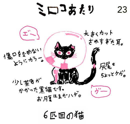 mirocoatari23_kuro1.jpg